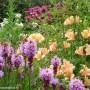 liatris-alstroemeria-monarda.jpg
