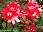 rosa-topsy-turvy