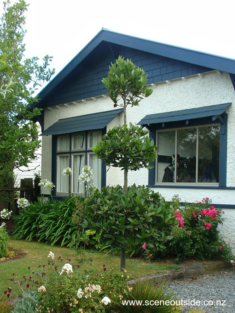 laurus-nobilis-topiary-end2014.jpg