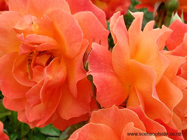 rosa-fellowship-closeup-1.jpg