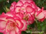 rosa-hannah-gordon