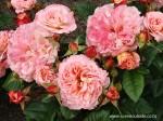 rosa-hayley-westenra
