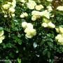 rosa-lemon-n-lime-2.jpg